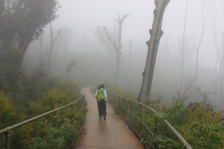 Lone walker walks the Prince Henry Cliff Walk at edge of Blue Mountains plateau in Katoomba during the misty morning that usually occour in this mountainous region. Stock Photo