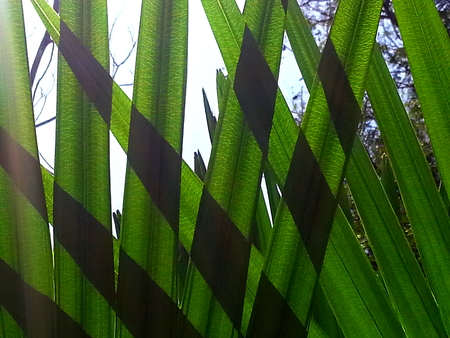 Sunlight filtering through palm leaves.
