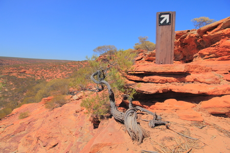 Withering tree and trail marking post at the sandstone trail to Nature Window in Kalbarri National Park, Australia Stock Photo
