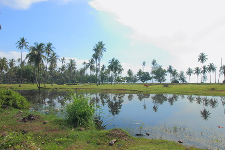 Green grass, coconut trees, and reflection in lakes water provides a tranquility scene of rural Malaysia in Bachok, Kelantan.