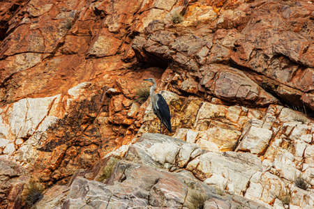 The West MacDonnell Ranges or West Macs stretch for over 200km west of Alice Springs.There are many gaps, gorges, waterholes along the way of Namatjira Drive as well a chances to see the wildlife.