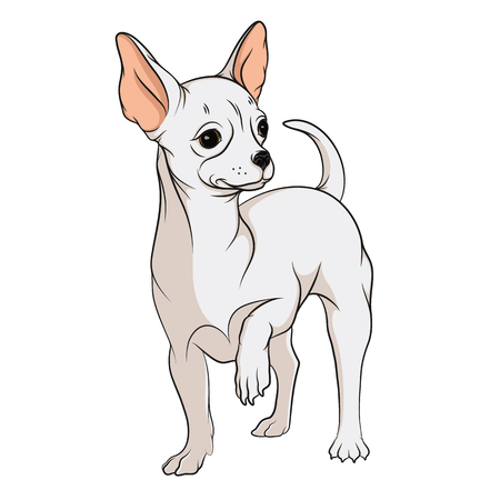 puppy cartoon: Vector drawing of a chihuahua. Isolated objects on a white background. Illustration