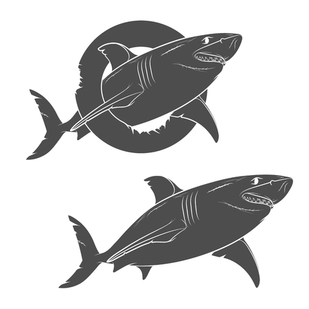 palate: Vector drawing of a terrible shark. Isolated objects on a white background. Illustration