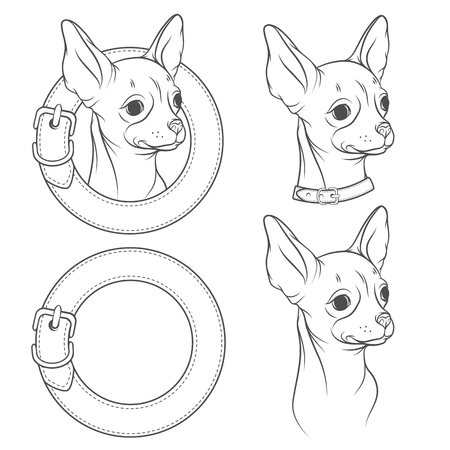 A set of vector drawing of the chihuahua in the collar. Vector illustration. Isolated objects on a white background.
