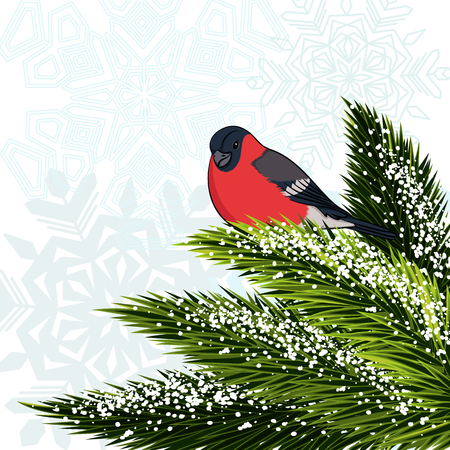 Bullfinch sitting on branch pine. Vector illustration