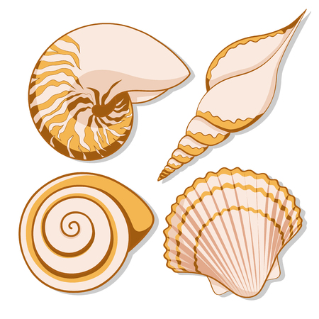 nautilus shell: Set of color graphic sea shells. Isolated objects with shadow on white background. Illustration