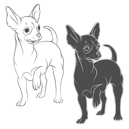 Vector drawing of a chihuahua. Isolated objects on a white background. Illustration
