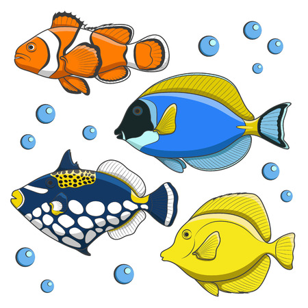 tropical fish isolated: Set of vector tropical fish. Isolated objects on white.