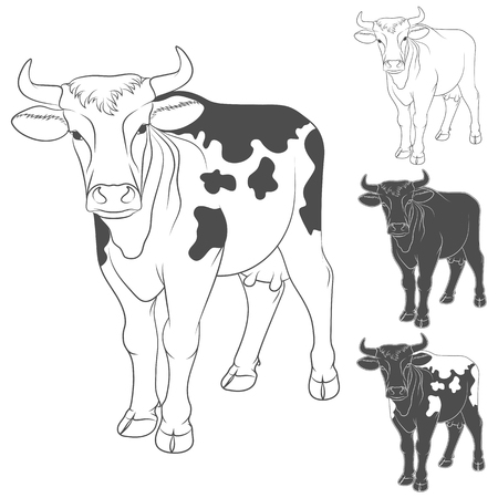 holstein: Vector black and white cow. Side view. Isolated objects