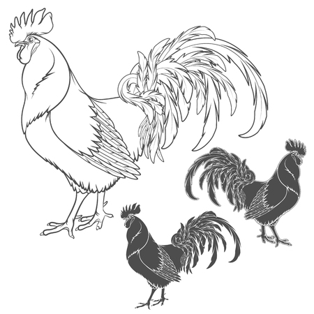 cock hand: Rooster or cock hand drawn sketch. Isolated vector objects on white background