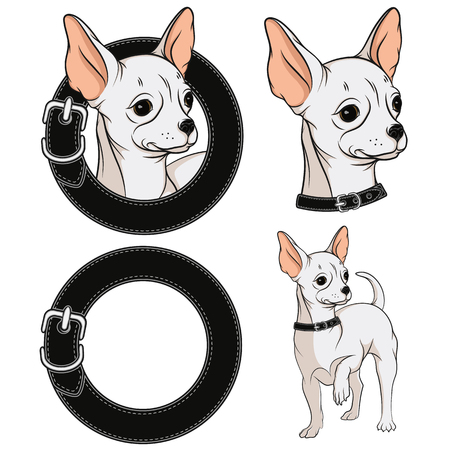chihuahua: Set of color illustrations with a Chihuahua in a collar. Vector isolated objects.