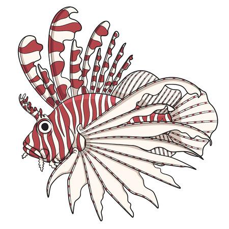 zebrafish: Color image lionfish. Vector objects on a white background. Illustration