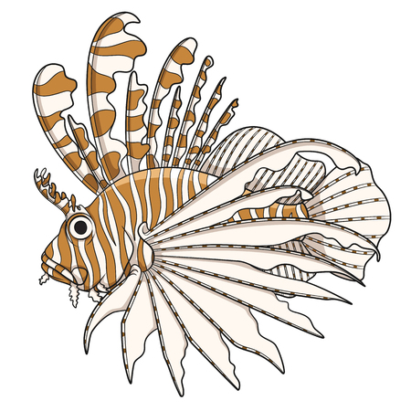 dragon swim: Color illustration lionfish. Vector objects on a white background.