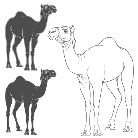 hardy: Set of vector image of a camel. Isolated objects on a white background.
