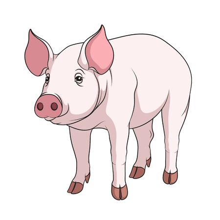 porcine: Vector color illustration of a pig. Isolated object on a white background.
