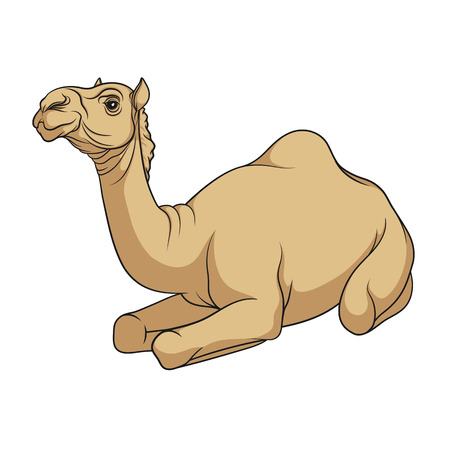 hardy: Color vector image of a camel. Isolated object on a white background.