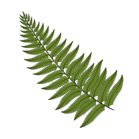 Color image fern leaf. Isolated vector object on white background. Illustration