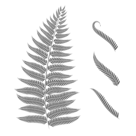 Black and white image of a fern leaf. Vector isolated objects on white background. Ilustracja