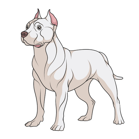 Color illustration of a pit bull dog. Isolated vector object on white background.