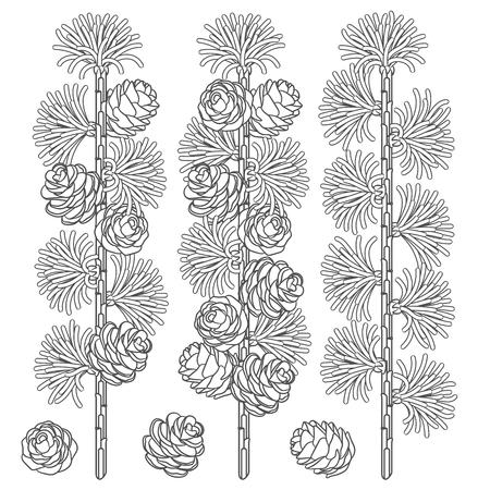 Ensemble d'images en noir et blanc de branches de mélèze et de cônes. Objets vectoriels isolés sur fond blanc.