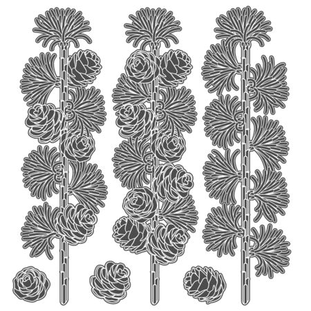 Set of black and white images of larch branches and cones. Isolated vector objects on white background. Иллюстрация