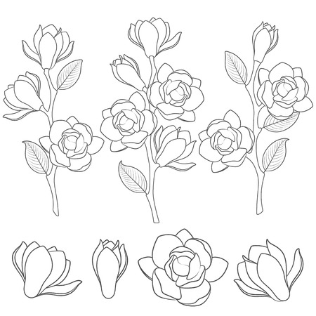 Set of black and white illustrations with flowering magnolia branches.