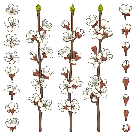 Set of color images with blossoming spring branches. Isolated vector objects on white background. Vetores