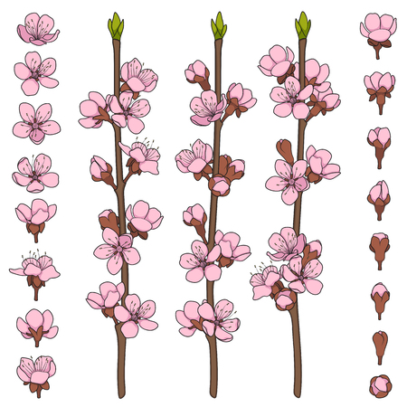 Set of color images with blossoming spring branches. Isolated vector objects on white background.