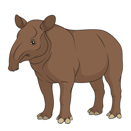 Color illustration of a plain tapir. Isolated vector object on white background. Ilustração