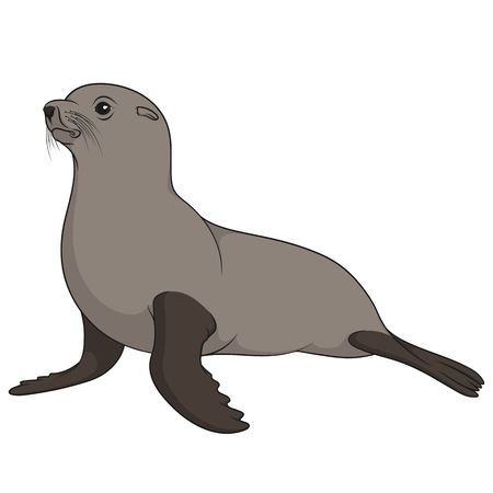 Color illustration with fur seal. Isolated vector object on white background. Ilustração