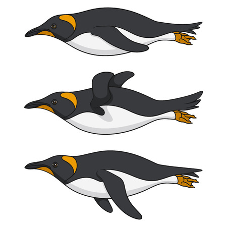 Set of color images of a swimming penguin. Isolated vector objects on white background.