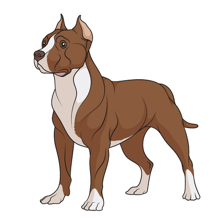 Pit bull with white spots. Isolated vector object on white background. Vector Illustration