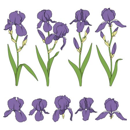 Set of color illustrations with iris flowers. Isolated vector objects on white background. Иллюстрация