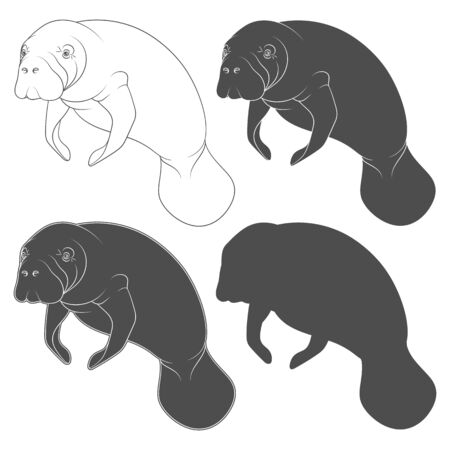 Set of black and white illustrations with manatee, a sea cow. Isolated vector objects on a white background.