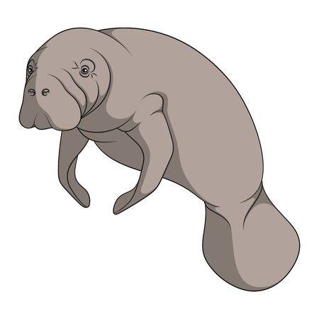 Color illustration with manatee, a sea cow. Isolated vector object on a white background. Illustration
