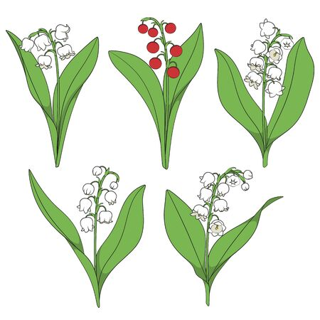 Set of color illustrations with lilies of the valley. Isolated vector objects on a white background.