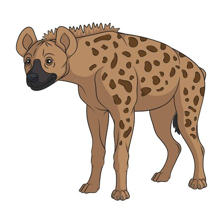 Color illustration with spotted hyena. Isolated vector object on a white background. Vettoriali
