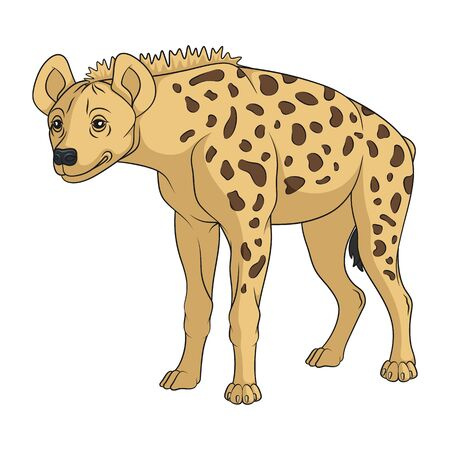 Color illustration with african spotted hyena. Isolated vector object on a white background. Vektoros illusztráció