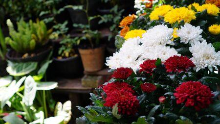 The Garden Banque d'images