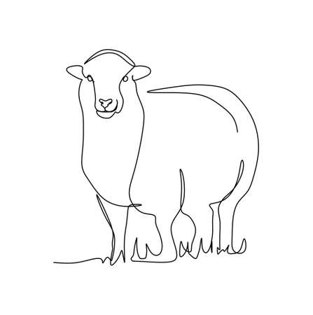 continuous one line drawing of a sheep standing on the grass. Vector illustration