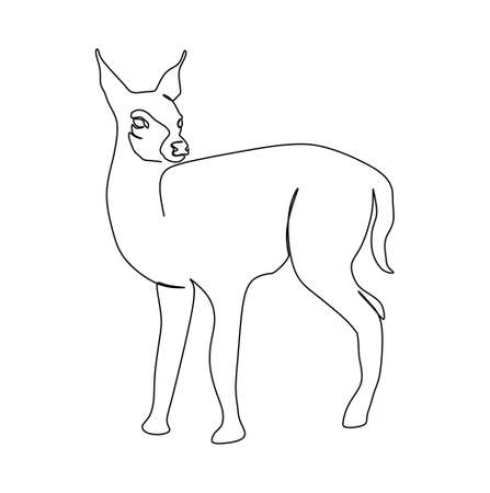 continuous one line drawing of a mouse deer. Vector illustration
