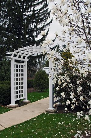 Trellis with magnolia blossoming off the path. photo