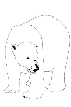Polar Bear Фото со стока - 3801053