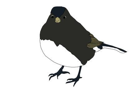 Black Bird Illustration