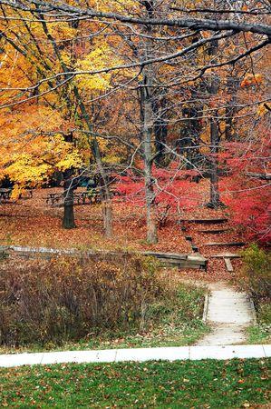 Fall colors at the park. 版權商用圖片