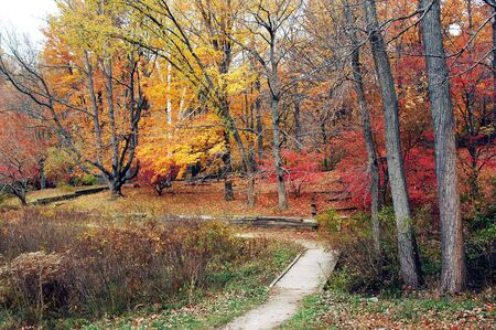 Peak color at the park.