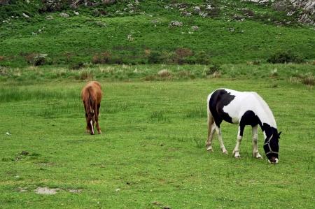 Horses in the pasture. 版權商用圖片