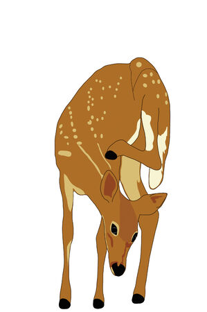 Early fawn has a itch. Illustration