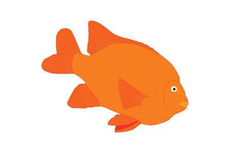 Tropical Orange Fish Illustration