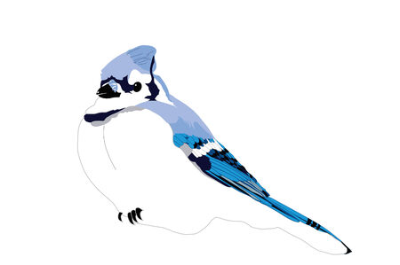 Blue Jay ready to perch Illustration